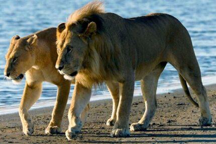 Full-Day Safari to Saadani