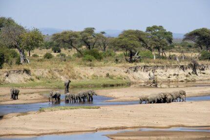 2 Days Safari to Nyerere