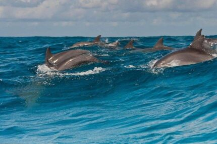 Dolphins Tour Snorkeling Mnemba